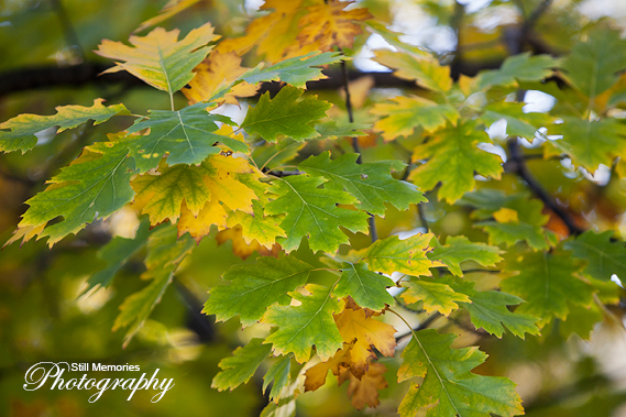 ironstone-vineyards-murphys-ca-wedding-photography-17